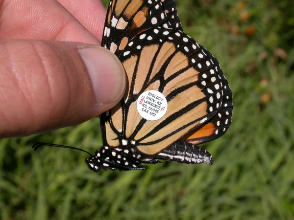 monarch_tagged