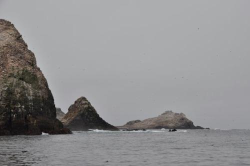 Spyhoppers and Egg Wars: California's Farallon Islands