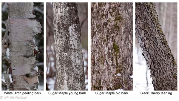 Bark Ages | Audubon Guides Different Types Of Tree Bark